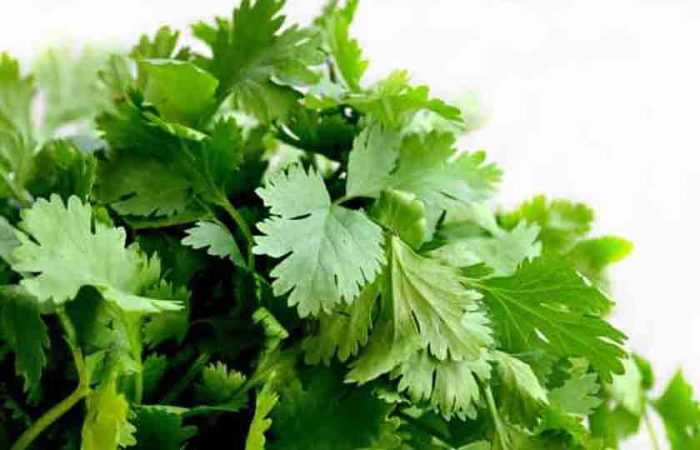 Dhania or Coriander